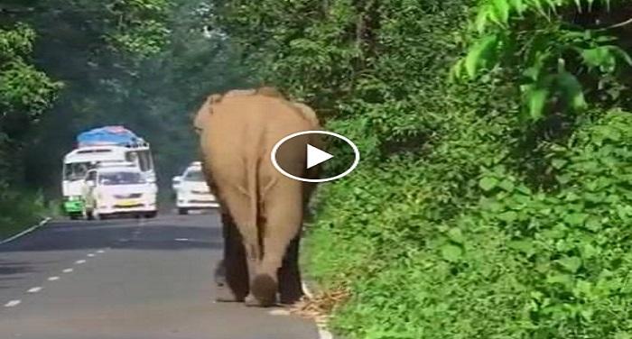 Elephant जब अपने परिवार को मुश्किल में देख गजराज को आया गुस्सा