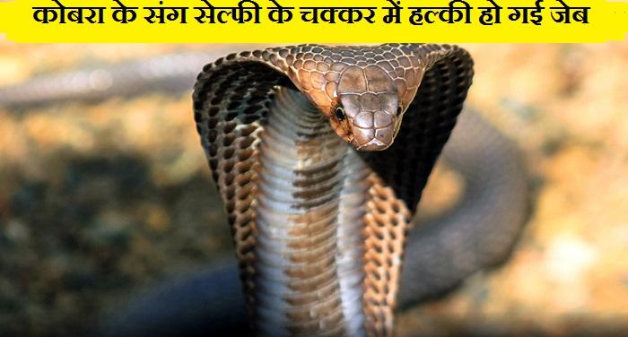 Kobra कोबरा के साथ सेल्फी लेना पड़ा महंगा, भरना पड़ा 25 हजार का जुर्माना