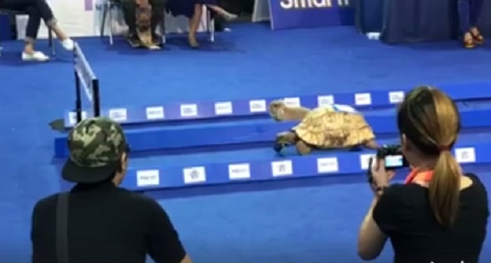 see-how-the-childhood-tortoise-story-become-true-in-real-life