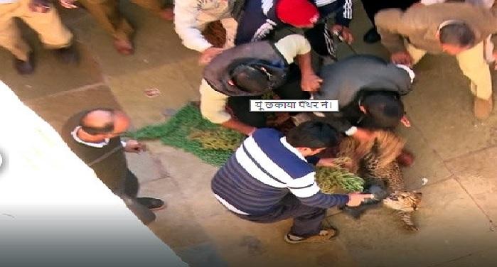 panther in jaipur राजस्थान विश्वविद्यालय में घुसा पैंथर, परेशान प्रशासन