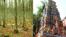 गए थे नीलकंठ मंदिर के दर्शन करने के लिए लेकिन जंगल में…