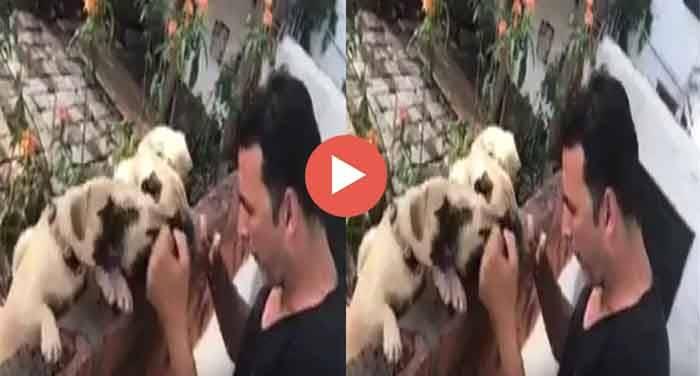 17439700 1959417390958298 181487435 n जब अक्षय ने कुत्तों को सिखाई बॉक्सिंग, देखें वीडियो
