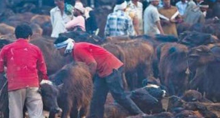 boochad khane यूपी की तर्ज पर उत्तराखण्ड में अवैध बूचड़खानों पर हुई कार्रवाई