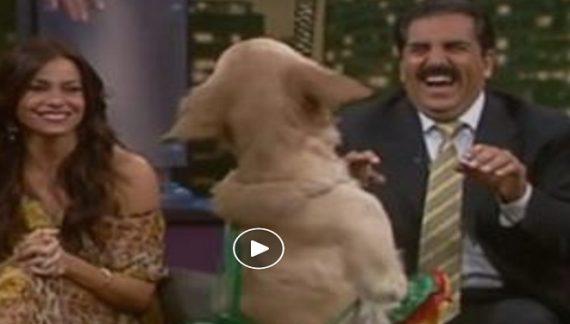 जब एक कुत्ता बना डांस पार्टनर, देखें वीडियो