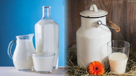 रोजाना दूध पीना सेहत के लिए हो सकता है हानिकारक!