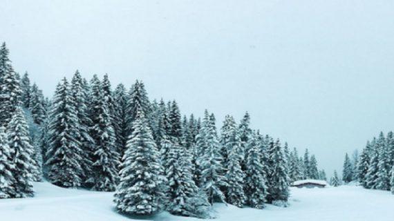 मौसम ने ली करवट कहीं बारिश, तो कहीं बर्फबारी