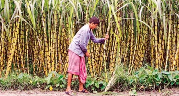sugarcane farmers गन्ना किसानों पर मेहरबान हुए योगी, 15 दिन में मांगी रिपोर्ट