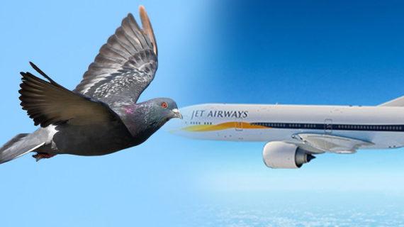 जोधपुर एयरपोर्ट पर टला बड़ा हादसा, पक्षी से टकराया जेट एयरवेज