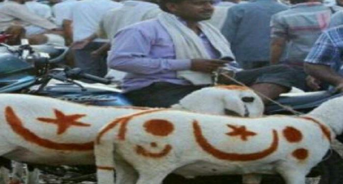 muslim society, against, qurbani, bakri eid, animals