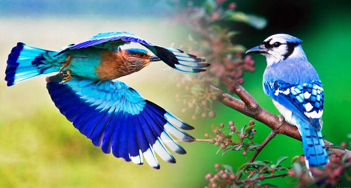 neelkanth विजयादशमी में नीलकंठ का दर्शन क्यों है लाभकारी, नीलकंठ का दर्शन करें इस वीडियो में