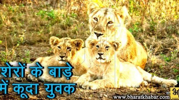 मध्यप्रदेश: मानसिक रूप से बीमार युवक शेरों के बाड़े में कूदा, 25 मिनट तक रहा मौजूद