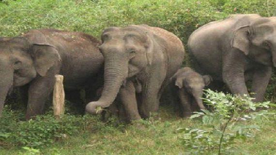 ऋषिकेश-देहरादून मार्ग पर हाथियों के आतंक से दहशत