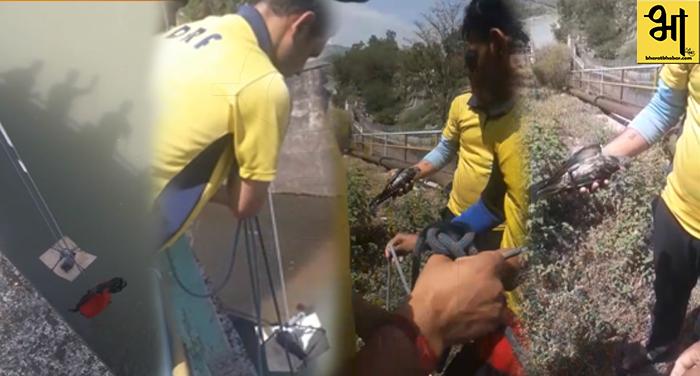उत्तराखंड में कबूतर का किया एसडीआरएफ टीम ने रेस्क्यू, देखें वीडियो