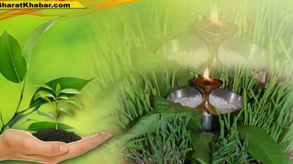 निबन्धन एवं मुख्य कार्यकारी अधिकारी भेषज विभाग डॉ.मेहरबान सिंह बिष्ट ने बताया कि पौधों को वितरित किया जाना है