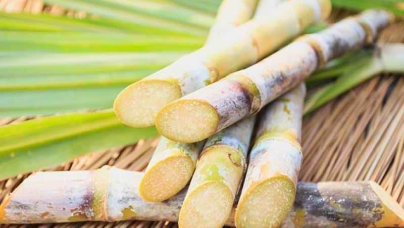 Health Benefits Of Sugarcane Juice That Must of Didnt Know गन्ने का जूस पीने से लीवर होता है हेल्दी, जाने इसके फायदे