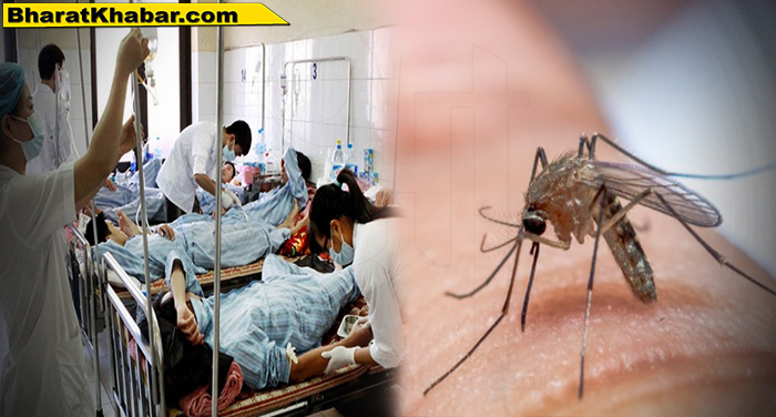 dengue mosquito 1 यूपी में डेंगू का कहर जारी, फिरोजाबाद में डेंगू से अब तक 62 की मौत