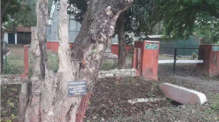 एफआईआर में पेड़ों पर शोध करते रह गए साइंटिस्ट, परिसर में ही बिना देख-भाल के सूख गए सैकड़ों पेड़