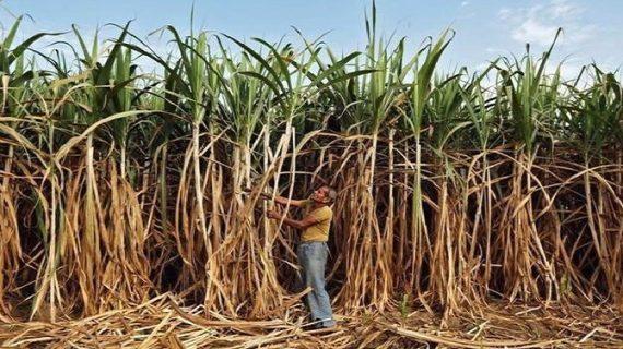 किसानों के द्वारा देशभर में चलाए जा रहे आंदोलन के बीच केंद्र सरकार ने लिया बड़ा फैसला
