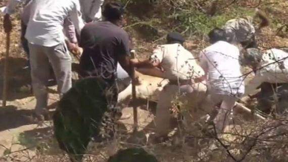गुजरात के गीर जंगल में शेरों की मौत का सिलसिला जारी, 18 दिनों में 21 शेर की मौत