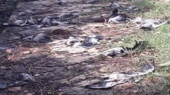 ओडिशा और आंध्र प्रदेश में 'तितली' तूफान ने मचाई तबाही,ओडिशा में हजारों पक्षियों की मौत