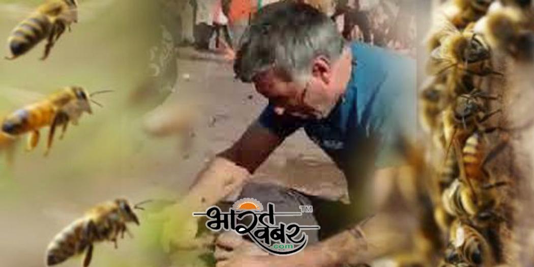 madhumakhi ka hamala हरिद्वार में मधुमक्खियों ने पर्यटकों पर किया हमला, मची अफरा-तफरी
