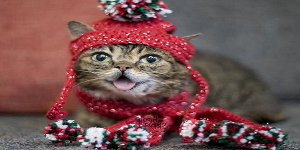 cat इंटरनेट पर सर्वाधिक लोकप्रिय बिल्ली की 8 साल की उम्र में मौत