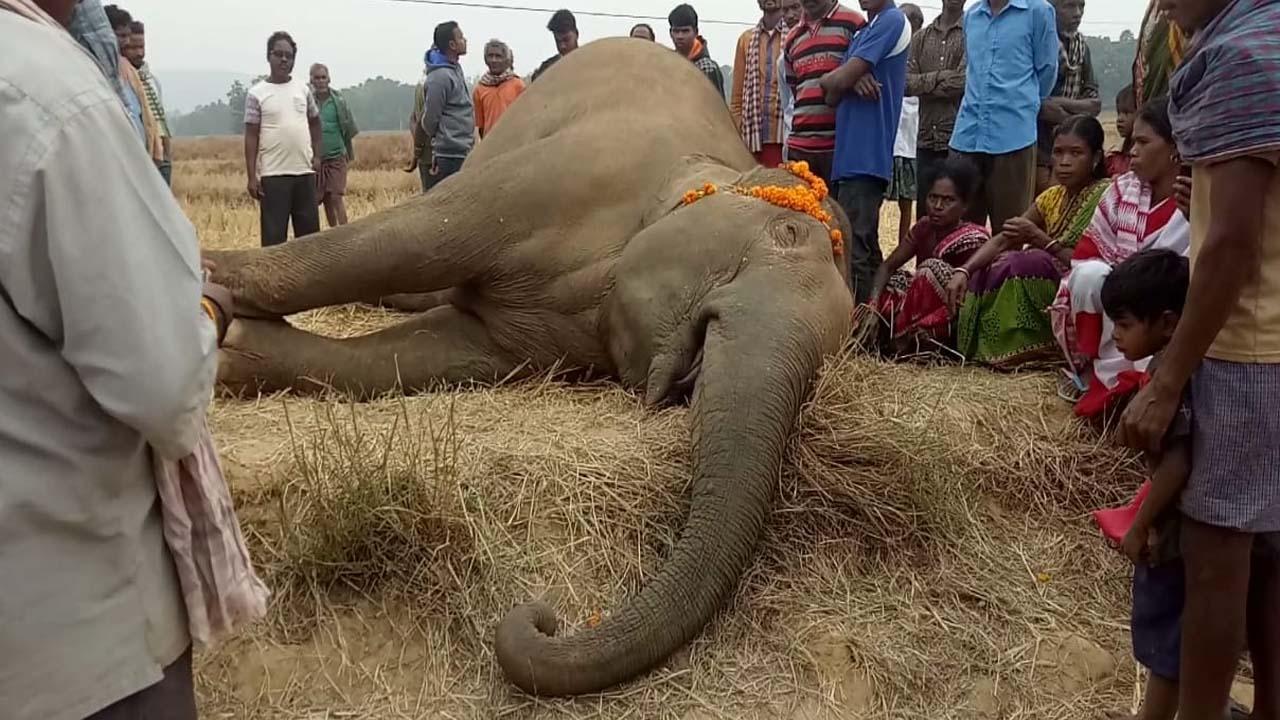 elephant death मादा हाथी की मौत, वन अधिकारीयों को किया निलंबित