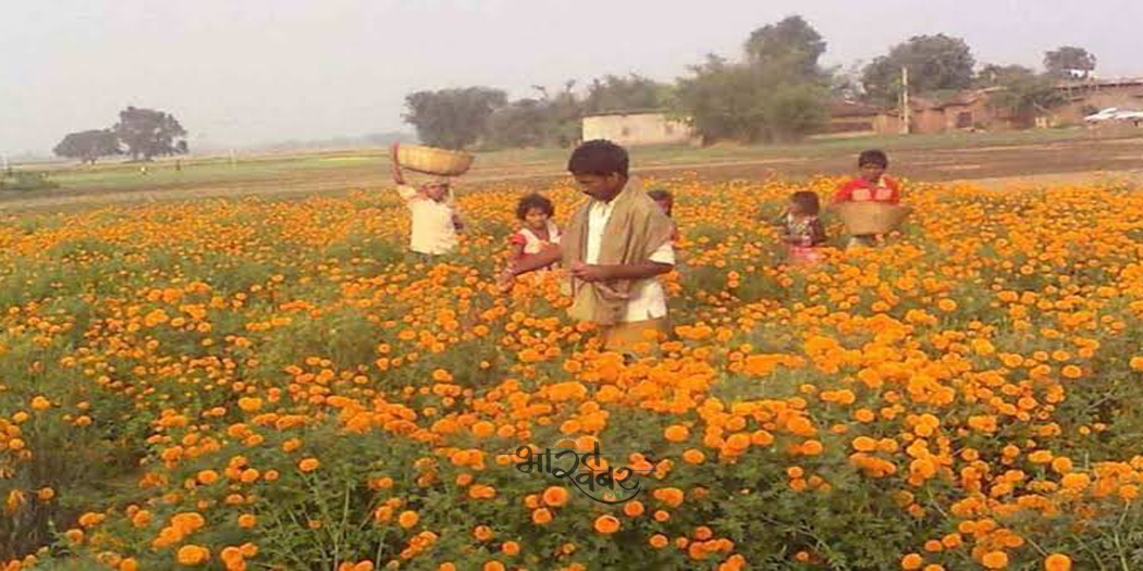 flower planting फूलों की महक से किसान परिवारों की अच्छी आमदनी जिंदगी में खुशहाली