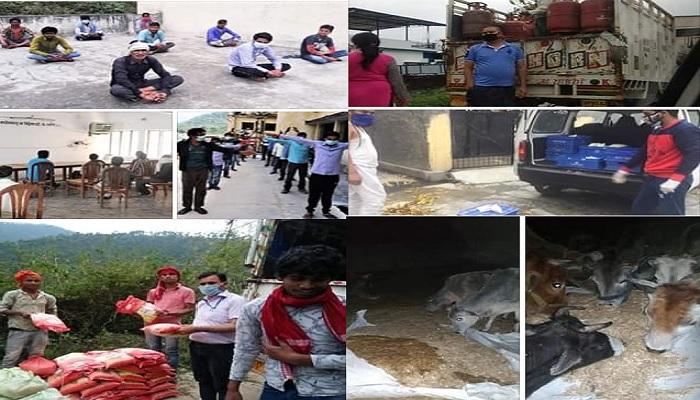 बड़कोट (उत्तरकाशी) में नगर पालिका द्वारा शहर में विचरण करने वाले आवारा पशुओं को चारा, भूसा आदि की व्यवस्था की गई