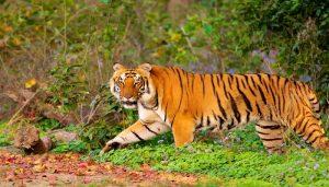ani2 इंसान तो इंसान जानवरों पर भी कोरोना का कहर, जानवरों को कोरोना से कैसे बचाएगी सरकार?