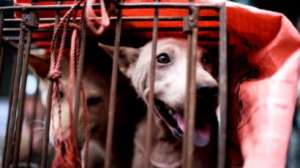 chaina 3 1 चीन में बंद होने जा रहा कुत्ते का मांस, चीन पर कैसे पड़ेगा इसका असर?