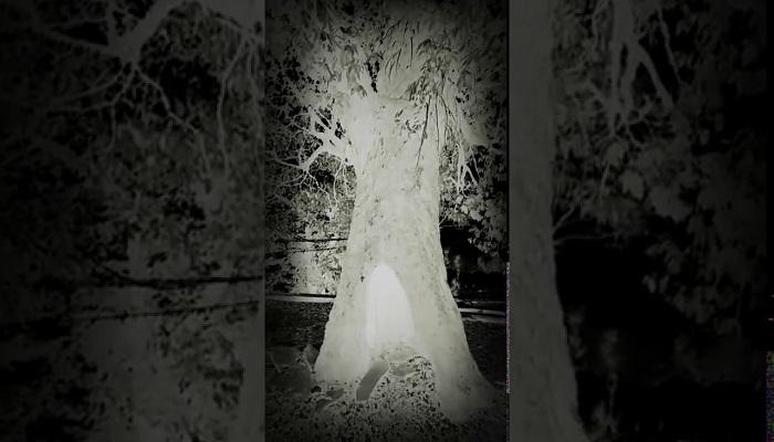 bhotiya tree मंगल ग्रह पर नासा ने की पेड़ लगाने की तैयारी, जानिए कब लगेगा पेड़?