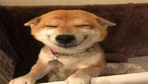 dog 1 कुत्ता प्रेम मालिक को पड़ा भारी, खाने की जगह कुत्ता खा गया लाखों के हीरे..