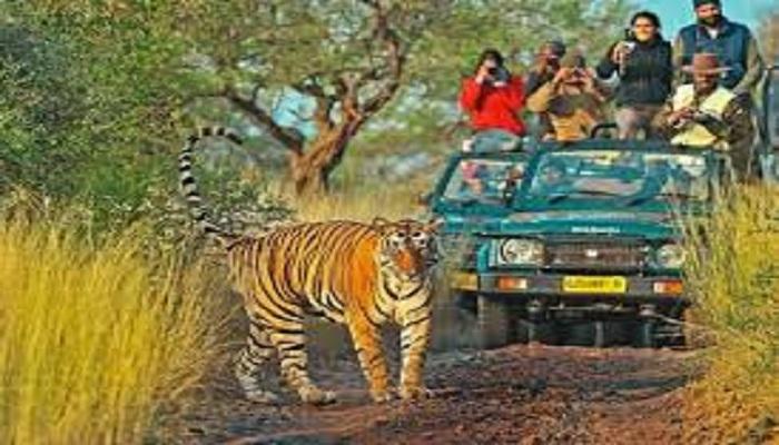 tiger 1 कोरोना के बीच सरकार क्यों खोलने जा रही पर्यटकों के लिए ये स्थल?