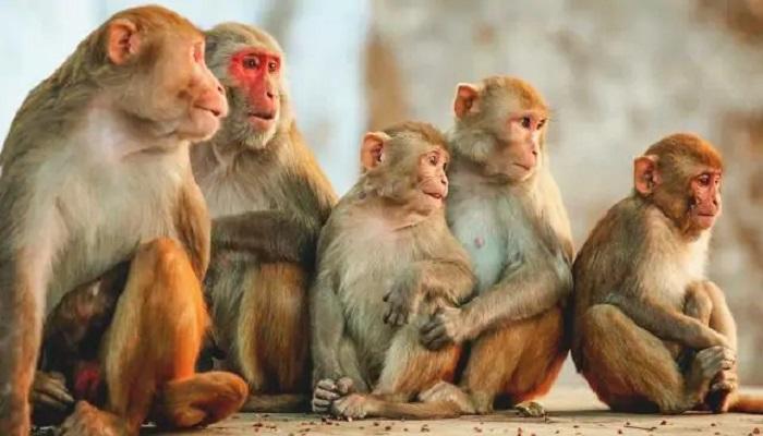 बंदरों से परेशान उत्तराखंड सरकार, मारने की मांगी अनुमति