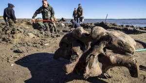fosil11 वेस्ट साइबेरियाई झील में विशालकाय जानवरों का ढांचा मिला..