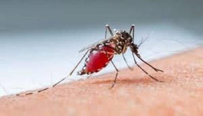 क्या मच्छरों से फैल रहा कोरोना, जानिए क्या कह रहे डॉक्टर?