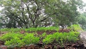 nature 1 सावन में 20 साल बाद बन रहा हरियाली अमावस्या का अनोखा संयोग..
