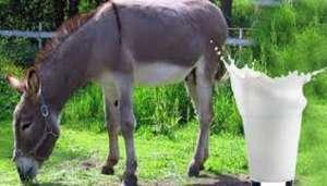 donkey 2 गधी के दूध के फायदें जान लिए तो भूल जाओगे दुनिया के सारे दूध, दुनिया का सबसे महंगा दूध..