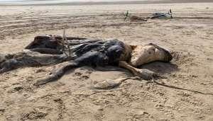 fosil 2 समुद्र किनारे अजीब जानवरों के अवशेष मिलने से लोगों के उड़े होश..