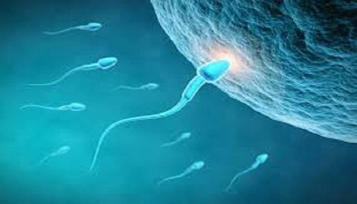 sperm 1 पुरूषों के बांझपन को दूर कर देंगे ये उपाय. जानिए कैसे बढ़ाएं शुक्राणु?