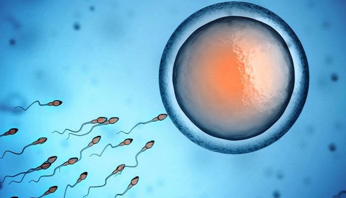 sperm 2 स्पर्म काउंट को बढ़ाने की क्षमता रखते हैं ये खाद्य पदार्थ, अपनी डाइट में करें शामिल