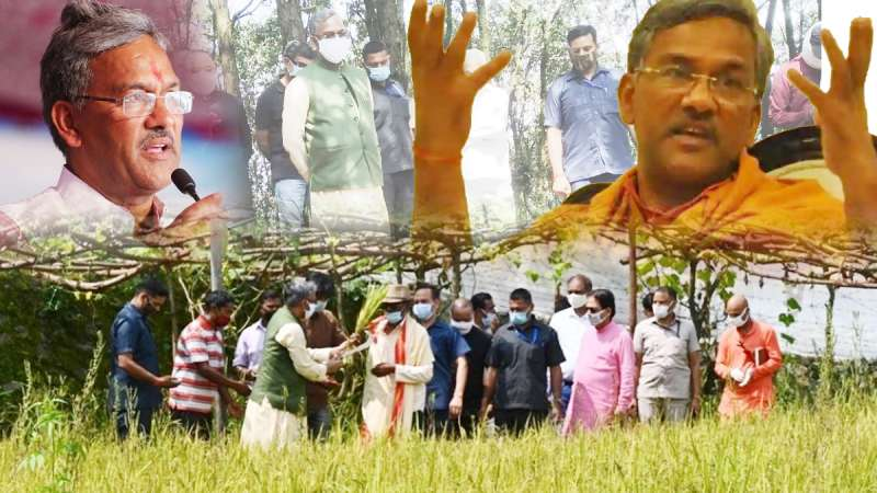 cm trivendra rawat dhan ki katayi गजब का नजारा: अरे वो देखो, मुख्यमंत्री जी हमारे बीच धान काट रहे हैं
