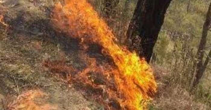 धूं-धूं कर जला जंगल, सांस लेने में हो रही दिक्कत