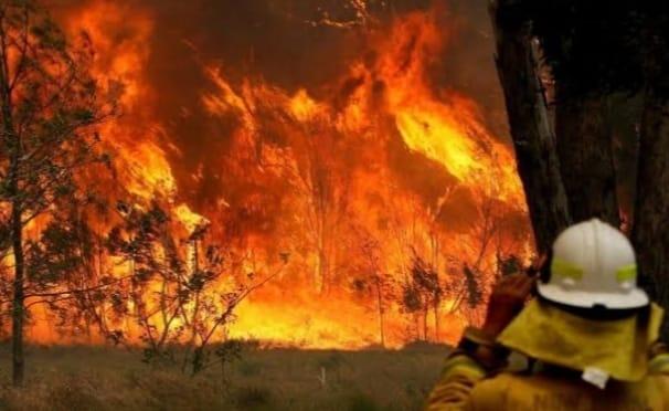 3dd0a398 5649 4aff bc20 523f52402506 बढ़ते तापमान के कारण ऑस्ट्रेलिया के जंगलो में लगी आग, 41 डिग्री के पार पहुंचा पारा