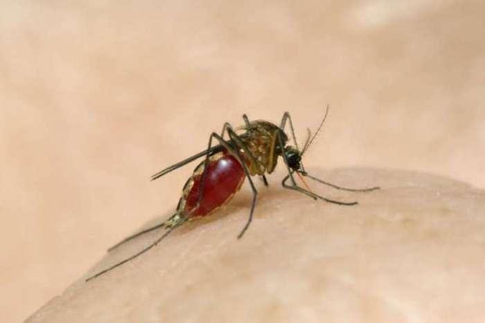 डेंगू, मलेरिया का डंक लगातार मार रहे हैं मच्छर, स्वास्थ्य विभाग हुआ अलर्ट