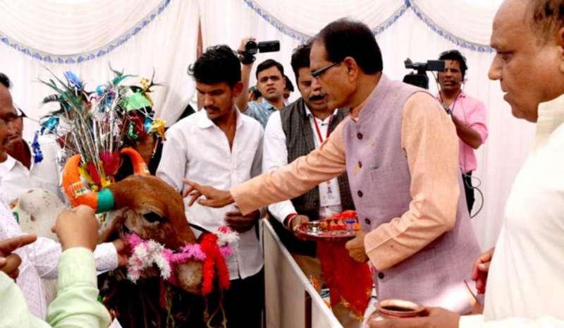 shivraj singh chauhan गायों की सुरक्षा के लिये शिवराज सरकार ने लिया बड़ा फैसला