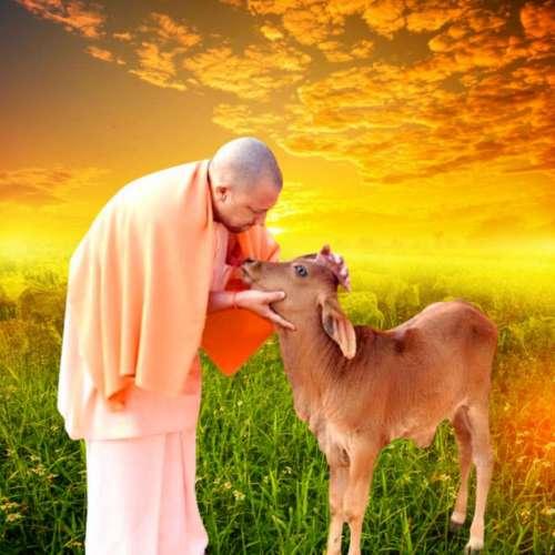 yogi ji सीएम योगी ने दी गोपाष्टमी की शुभकामनाएं, पढ़ें क्यों मनाया जाता है ये त्यौहार, क्या है पूजा की विधि
