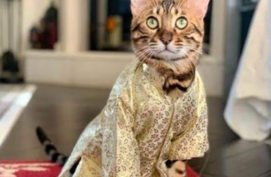 3274ea16 95da 4650 97ed 68150da006dd बिल्लियों के लिए कपड़े डिजाइन करता है इंडोनेशिया का ये शख्स, जानिए एक महीने की कमाई