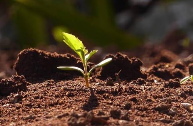 bff1b0e7 9b00 4fde 88da 573281031b4e आज के दिन मनाया जाता है विश्व मृदा दिवस, जानिए कब से हुई शुरूआत